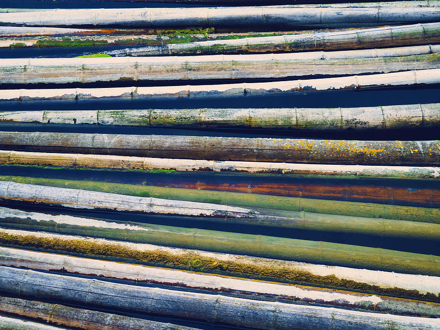 Bamboo Photograph - Colorful Bamboo by Wim Lanclus