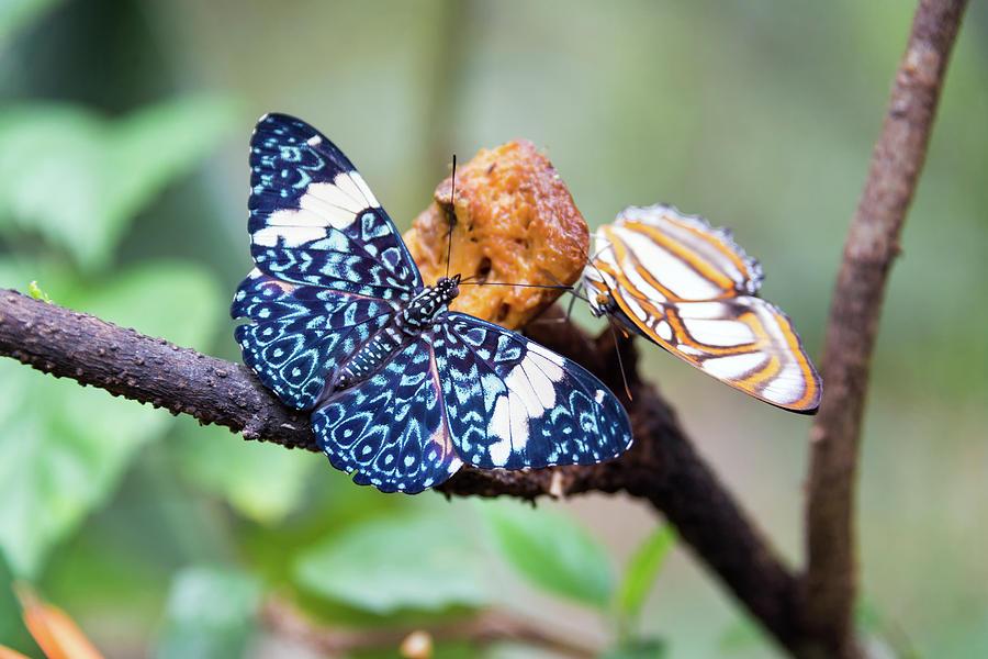 Amazon Photograph - Colorful Butterflies by Jess Kraft
