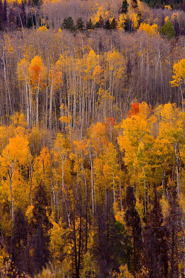 Vertical Photograph - Colorful Colorado Autumn Landscape Vertical Image by James BO Insogna