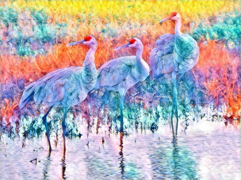 Colorful Cranes by Kimberly Woyak