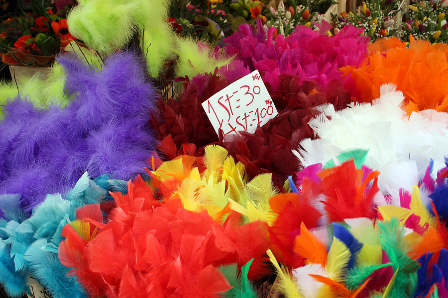 Colorful Easter Feathers Photograph