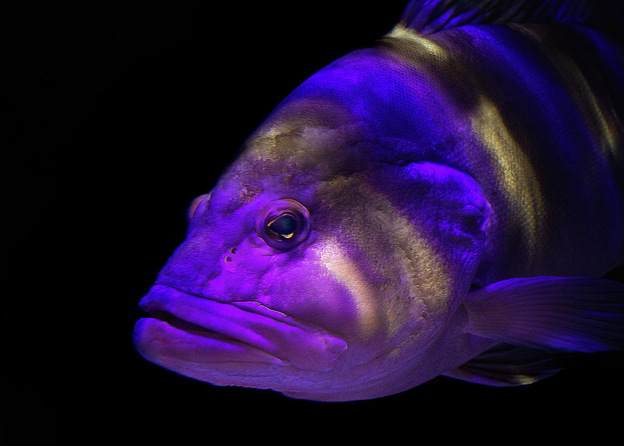 Fish Photograph - Colorful Face by Richard Goldman