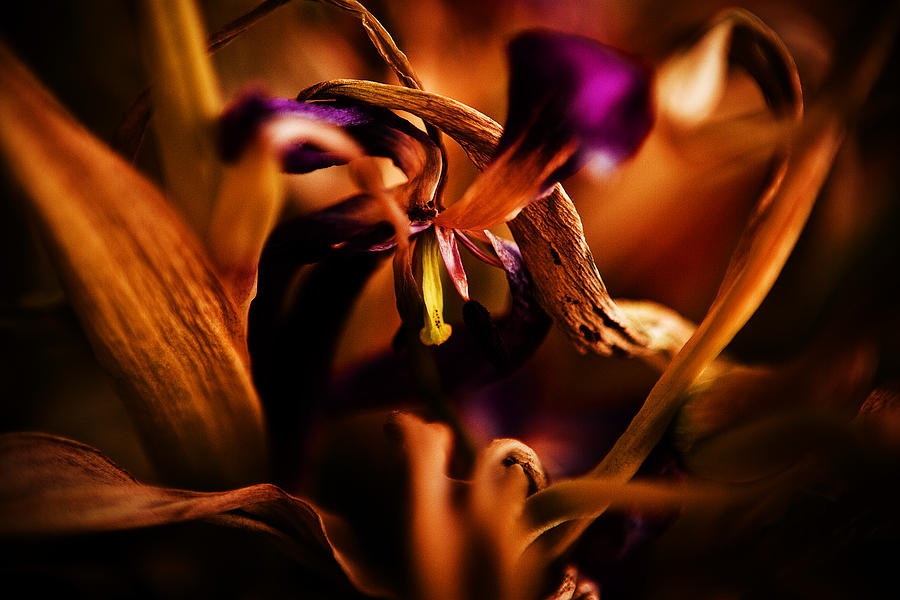 Abstract Photograph - Colorful Finale 05 by Nora Batternay