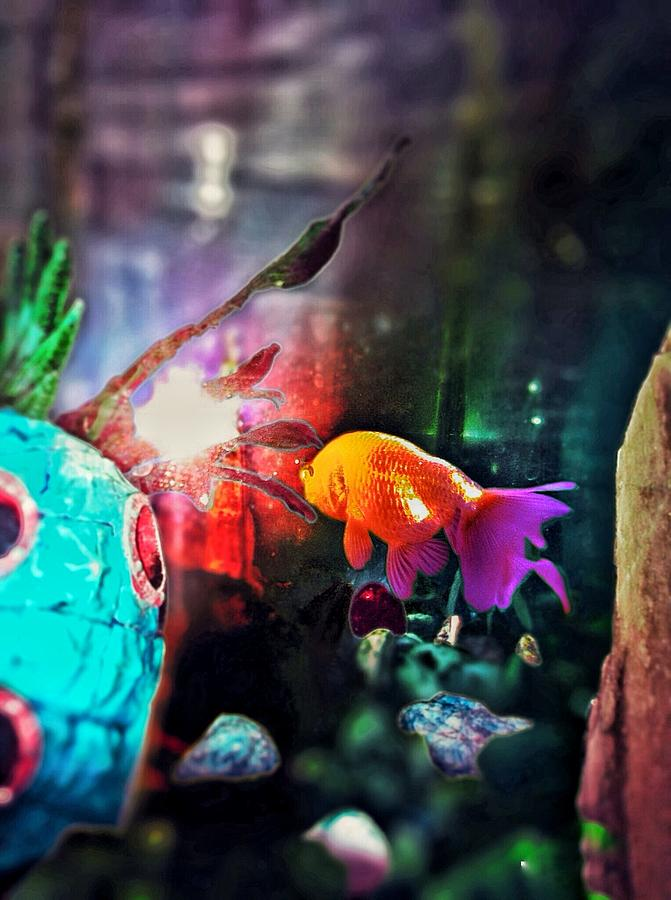 Fish Photograph - Colorful Fish by Eddie G