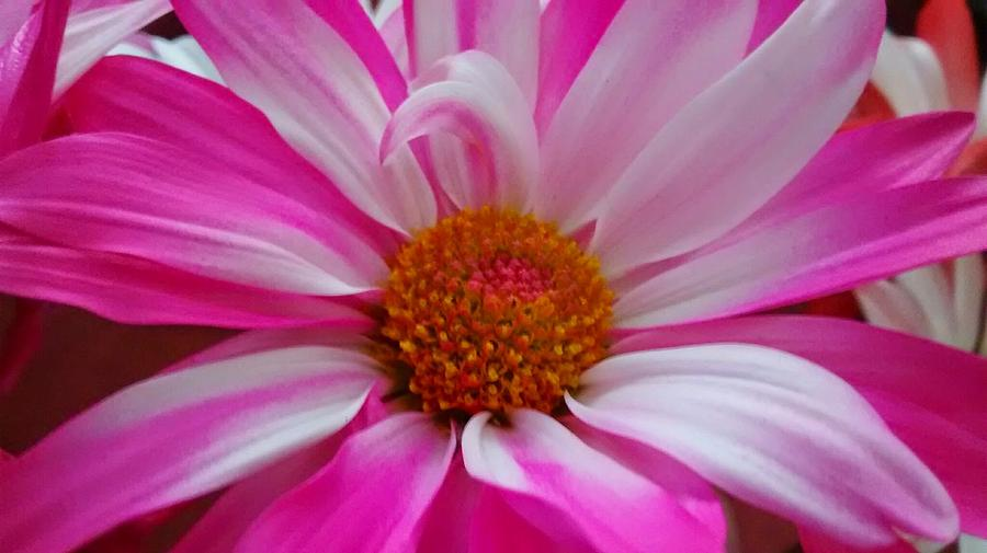 Flower Photograph - Colorful Flower by Dustin Soph
