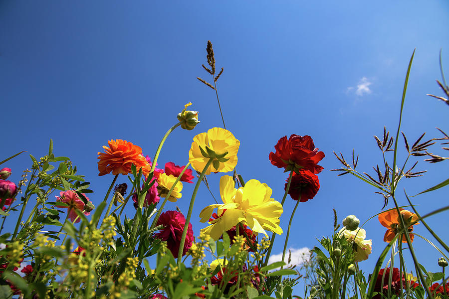 Colorful Flowers In A Field Against A Blue Sky On A Sunny Day