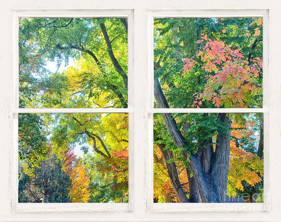 Colorful Forest Rustic Whitewashed Window View Photograph