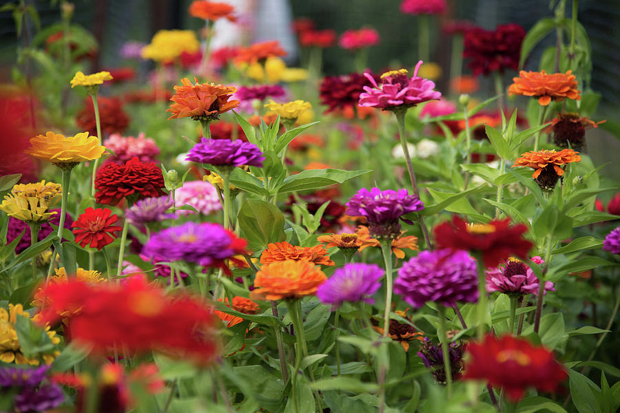 Colorful Garden Photograph