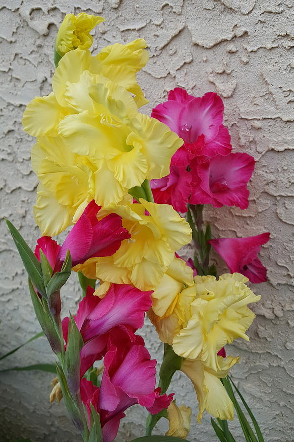 Colorful Photograph - Colorful Glads by Tammy Finnegan