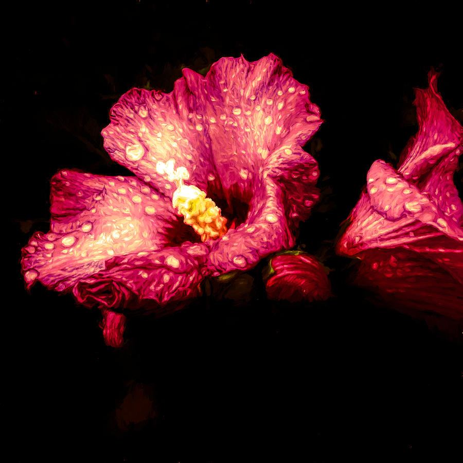 Colorful Hibiscus Flower Photograph by Debra Lynch