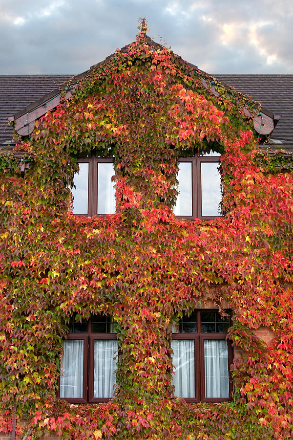 Colorful Photograph - Colorful Ivy House Ireland by Pierre Leclerc Photography