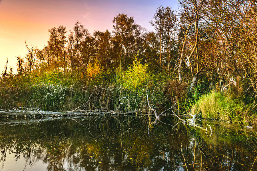 Nature Photograph - Colorful nature by Joost Lagerweij