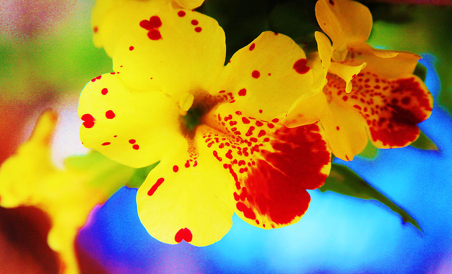 Botanical Photograph - Colorful Pansies by Lori Mahaffey