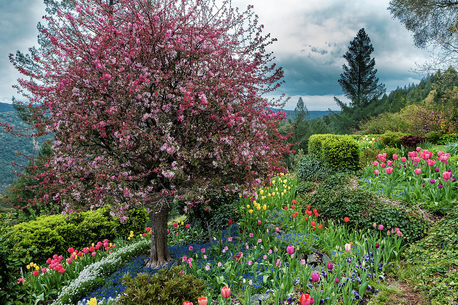 Blooming Photograph - Colorful Paradise  by Robin Mayoff