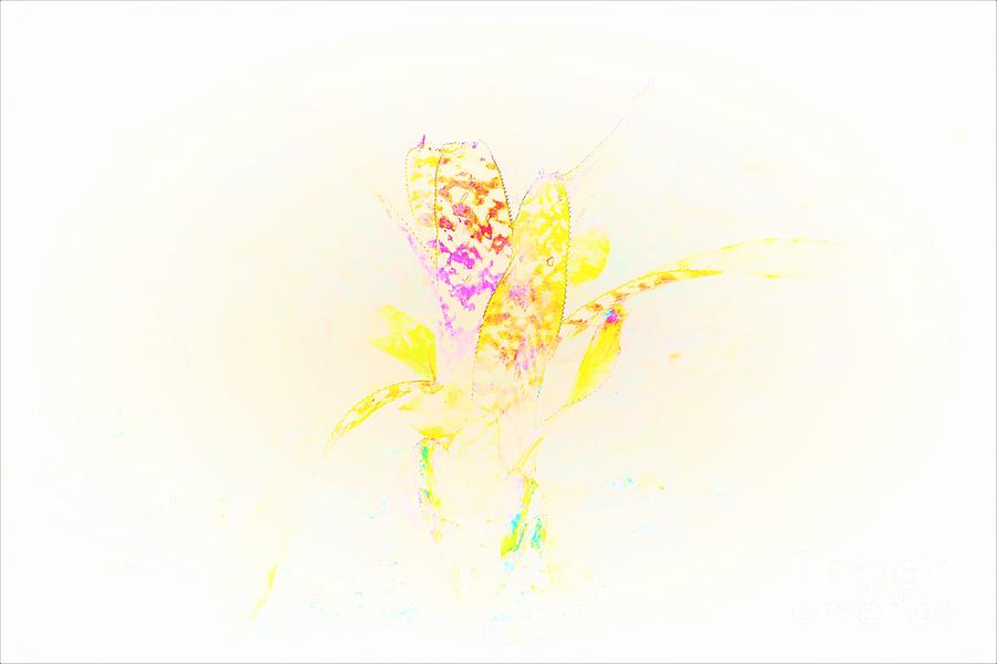 Colorful Plant Life Photograph