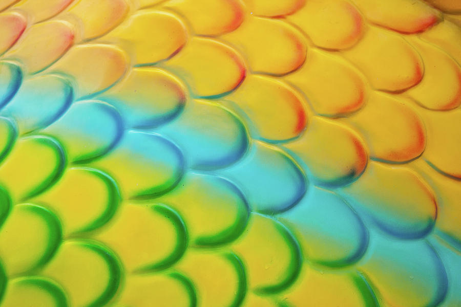 Abstract Photograph - Colorful Scales by Adam Romanowicz