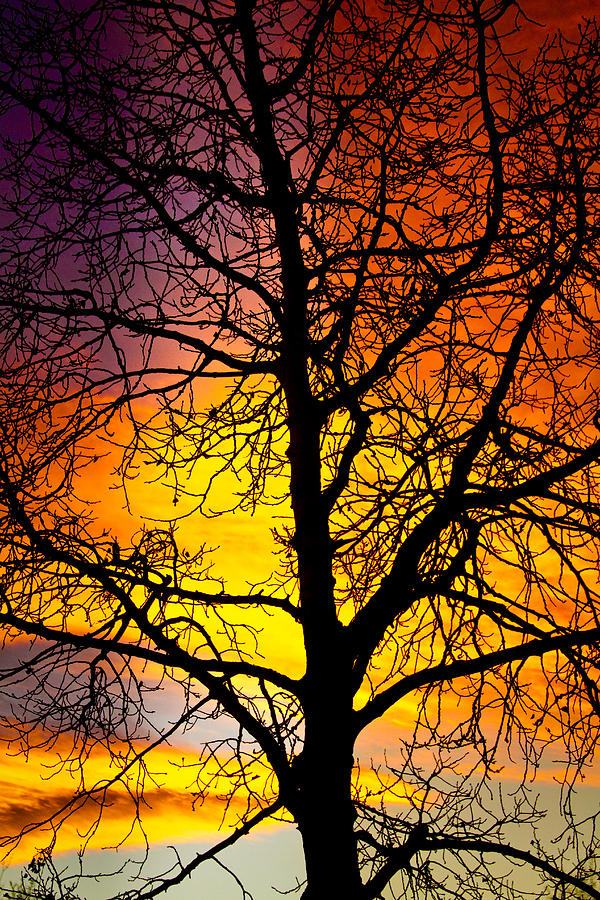 Silhouette Photograph - Colorful Silhouette by James BO Insogna