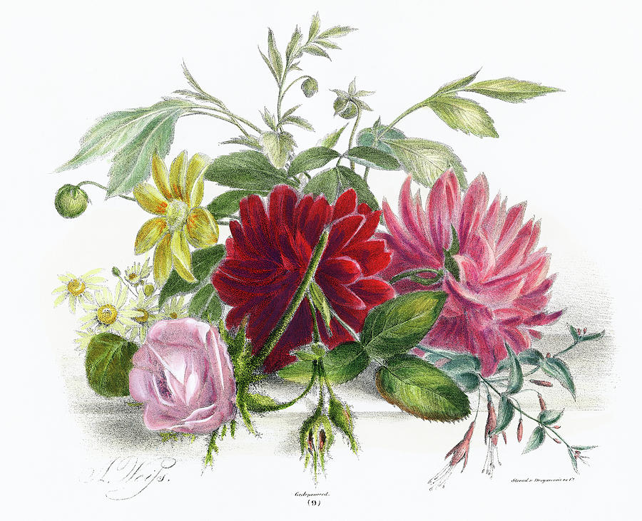 Colorful Still Life Of Flowers Drawing
