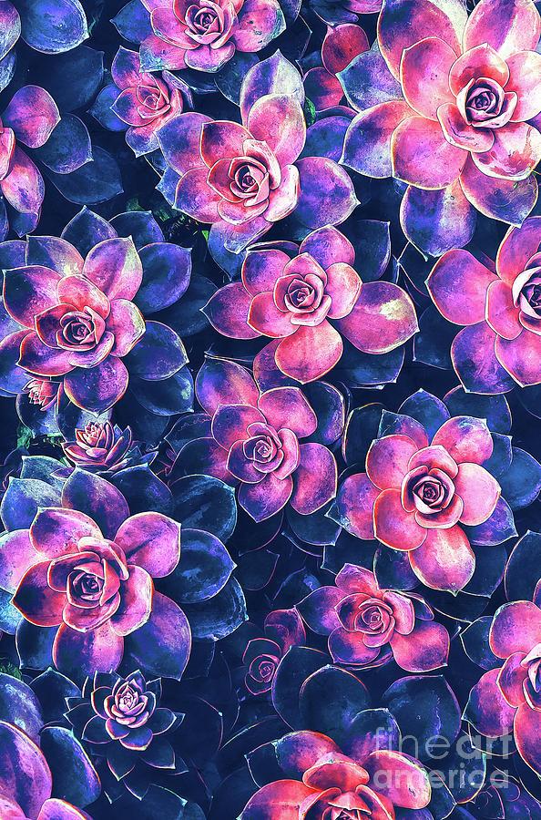 Succulents Digital Art - Colorful Succulent Plants by Phil Perkins
