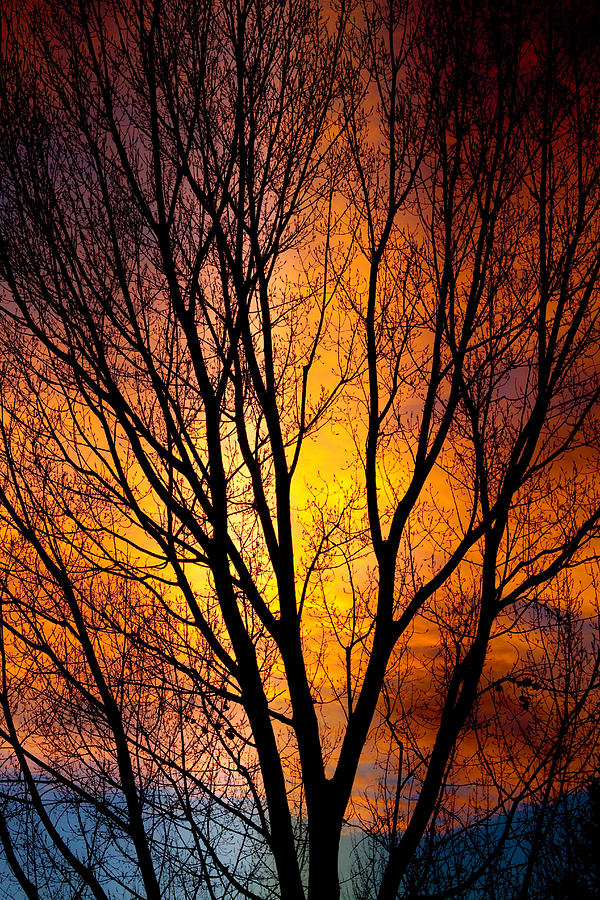 Vertical Photograph - Colorful Tree Silhouettes by James BO Insogna