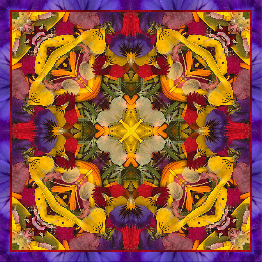 Mandalas Photograph - Colorific by Bell And Todd