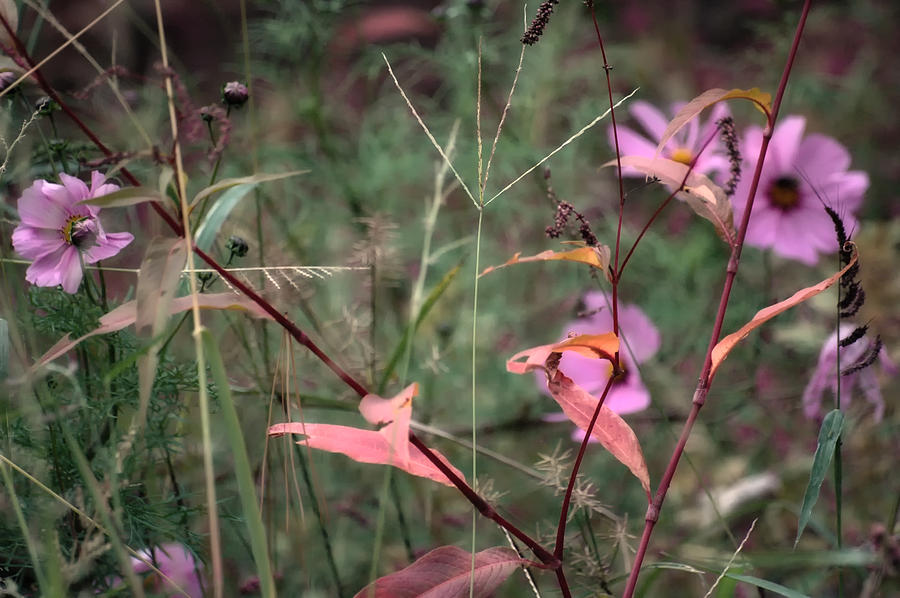 Flowers Photograph - Colorization Of Autumn by Ross Powell