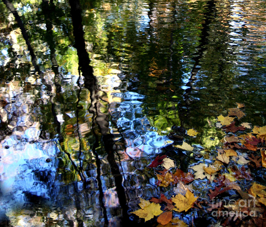 Digital Photography Photograph - Colors Are Deeds And Sufferings Of Light by Monika A Leon