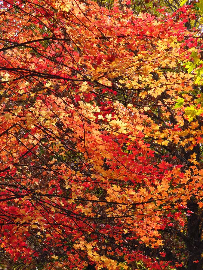 Leaves Photograph - Colors Blowing In The Wind by Lori Frisch