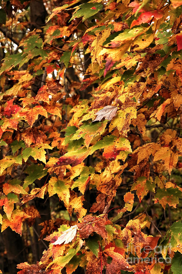 Colors Of Autumn Photograph - Colors Of Autumn by John Rizzuto