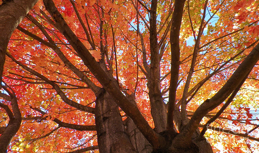 Trees Photograph - Colors Of Fall by Gina Sullivan