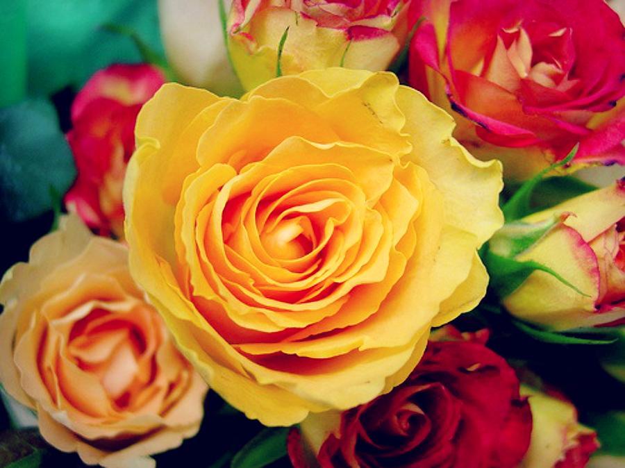 Colors Of Monet Photograph
