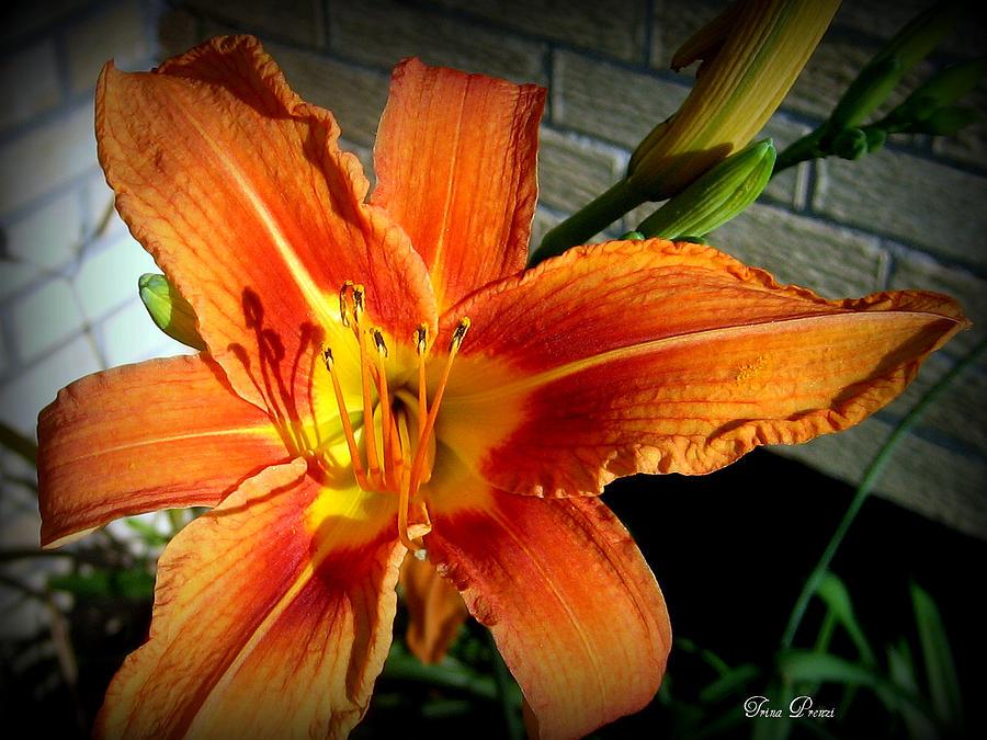 Flower Photograph - Colors Of The Sun by Trina Prenzi