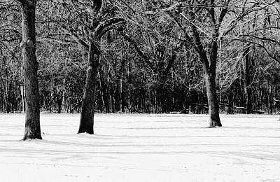Colors Of Winter 2 Photograph by Eduardo Hugo