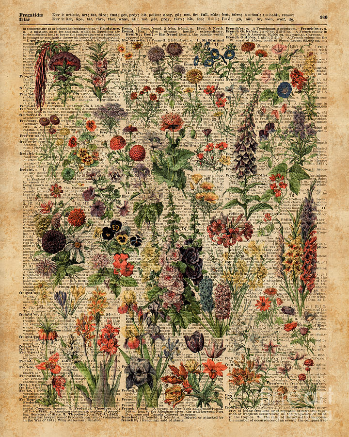 Colourful Digital Art - Colourful Meadow Flowers Over Vintage Dictionary Book Page  by Anna W