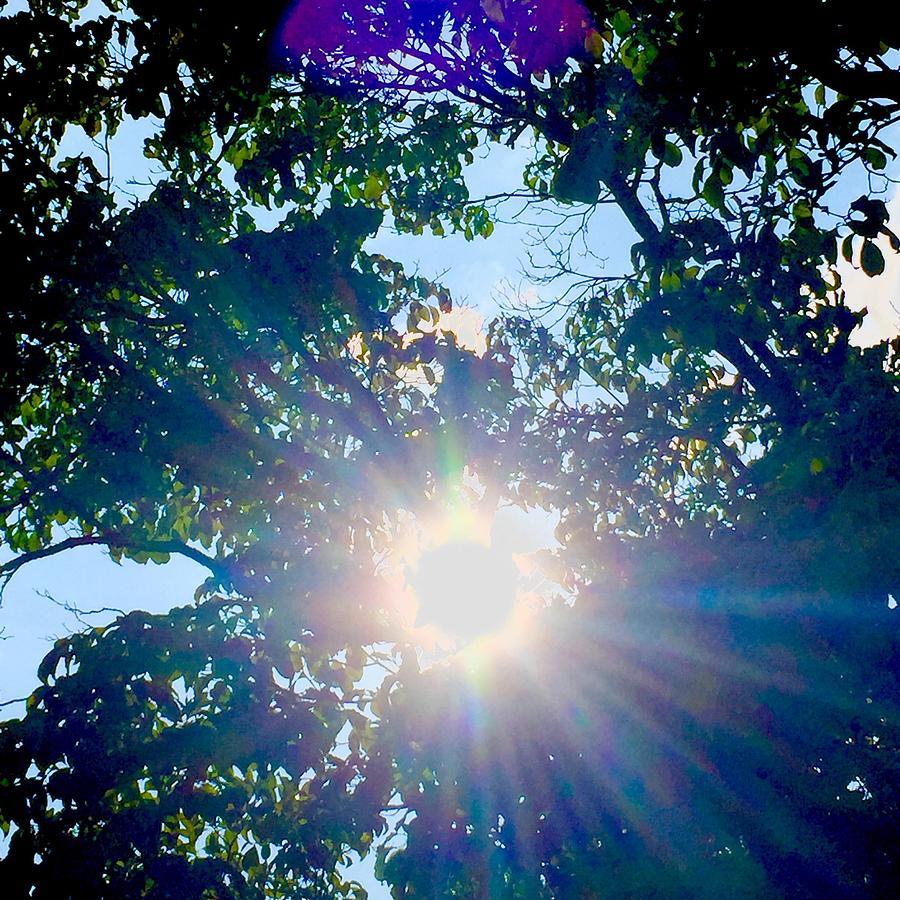 Sunburst Photograph - Colourful  Sunburst by Monica Sassano