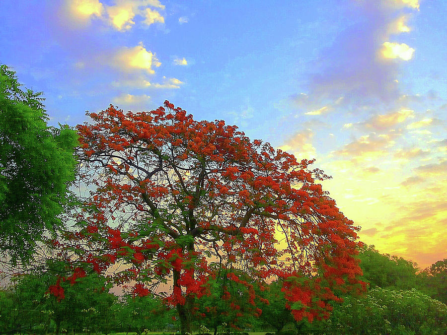 City Photograph - Colours Of Nature by Atullya N Srivastava