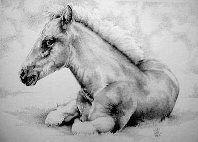 Wildlife Drawing - Colt by Bobby Kro