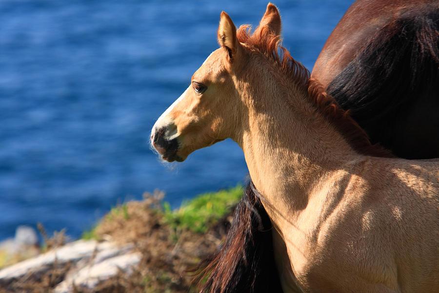 Horses Photograph - Colt By The Sea by Aidan Moran