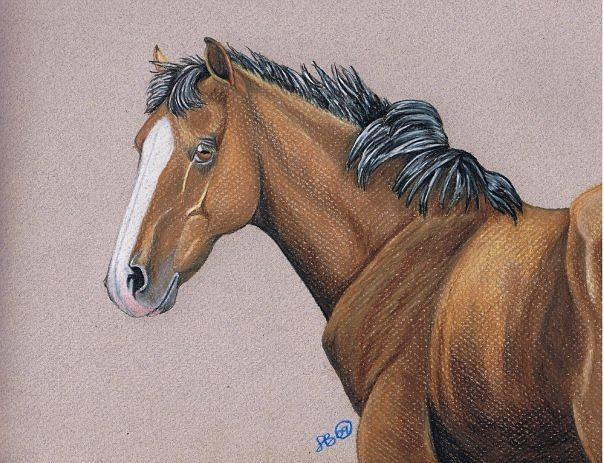 Horse Drawing - Colt by Leslie Becker