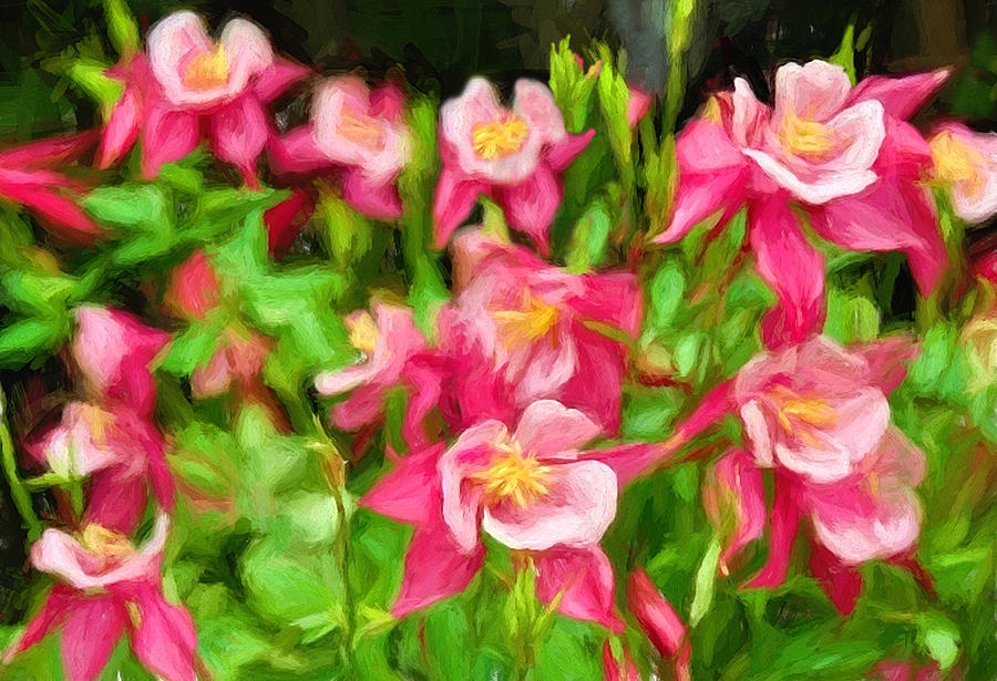 Columbine in the Quabbin by Mitchell R Grosky