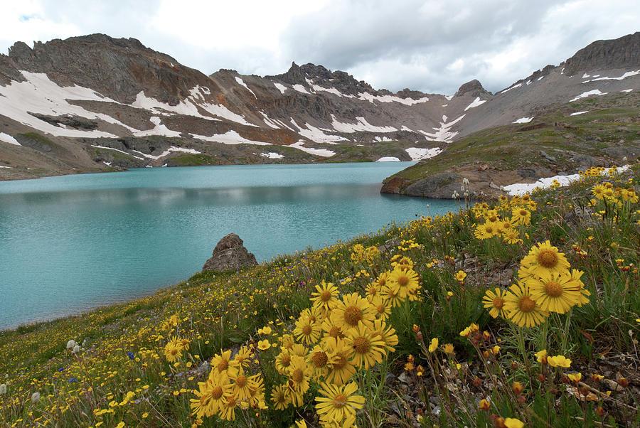 San Juans Photograph - Columbine Lake And Alpine Sunflower Landscape by Cascade Colors