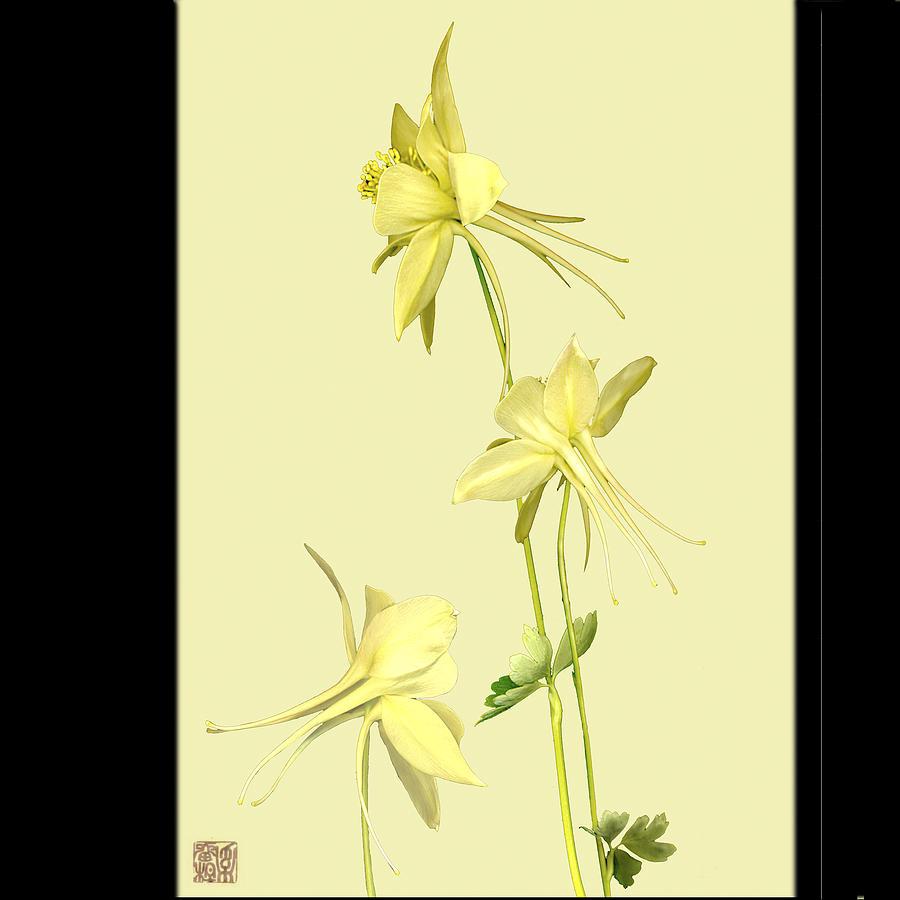 Flower Photograph - Columbine by Lloyd Liebes