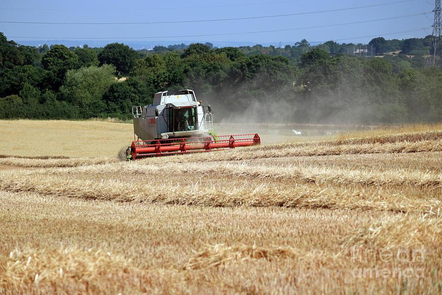 Combine in wheat field by Julia Gavin