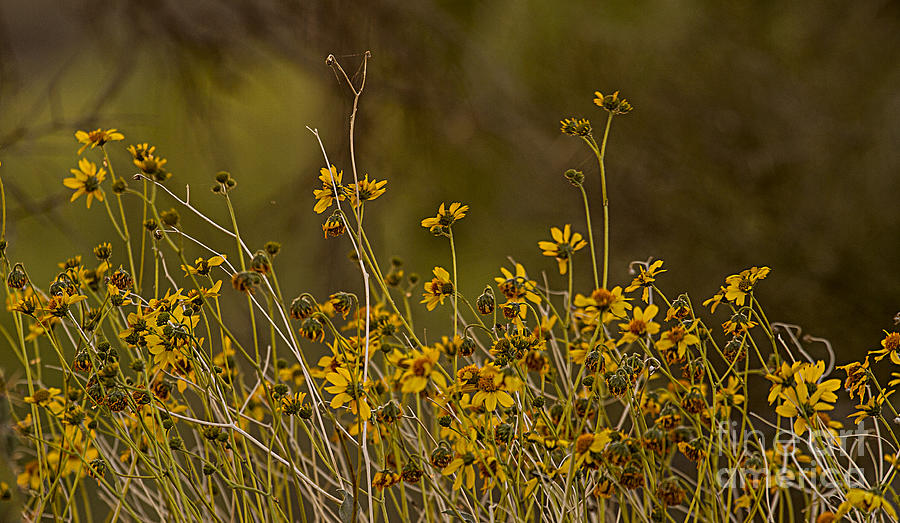 Come Play In The Wildflowers Photograph