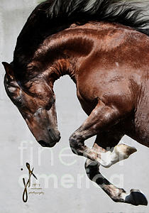 Equine Photograph - Comico Flies by Jeff Anderson