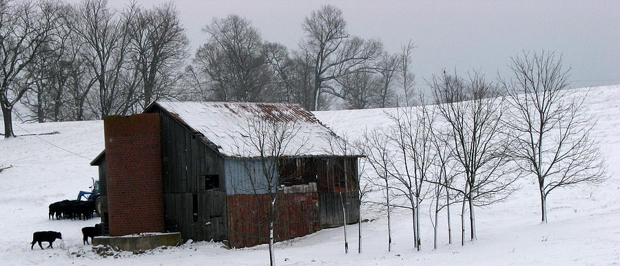 Barn Photograph - Coming Home by Joseph Battaglia
