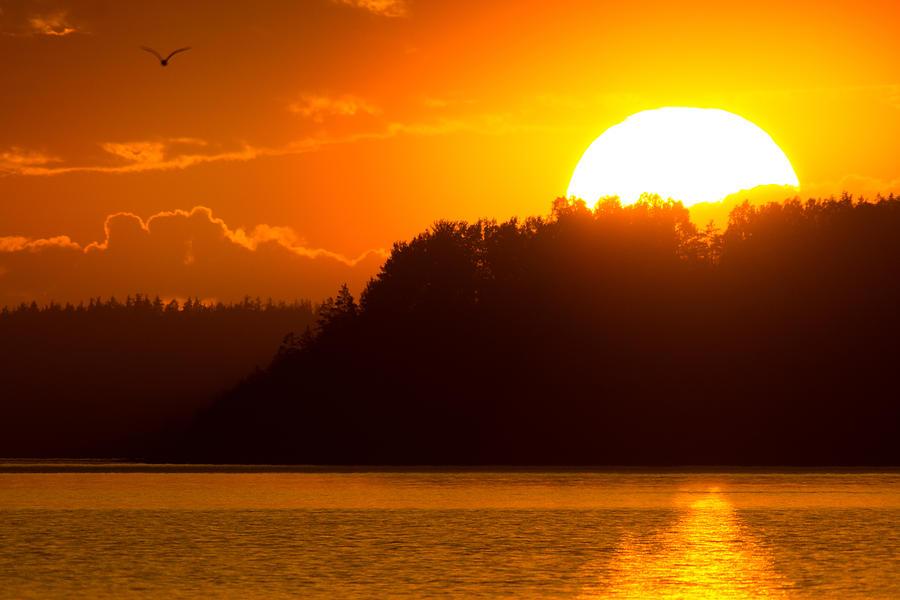 Sun Photograph - Coming Home by Sergei Lyssenko