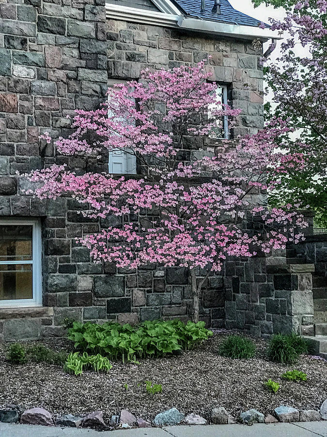 Blooming Tree Photograph - Coming Summer by Joseph Yarbrough