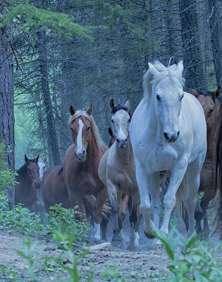 Horses Photograph - Coming Up The Hill by Eleszabeth McNeel