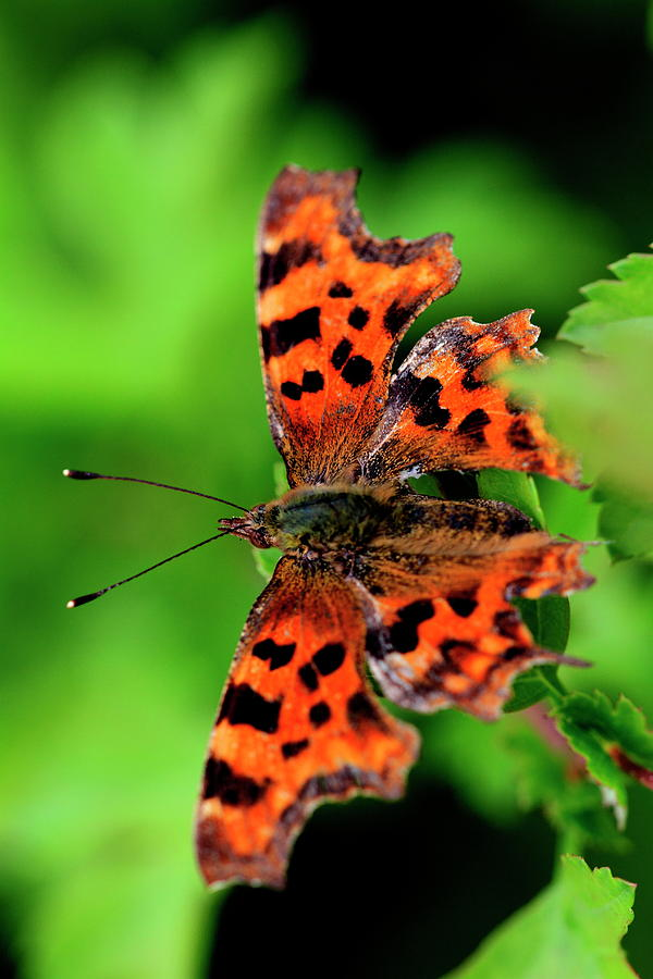 Comma by Ian Sanders